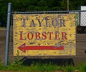 taylorlobster