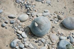 barnaclerock