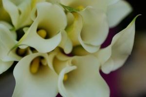 lilies2