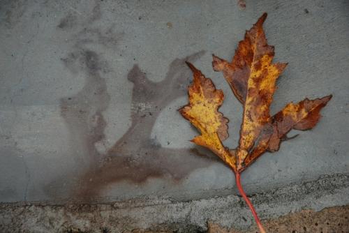 leafpattern