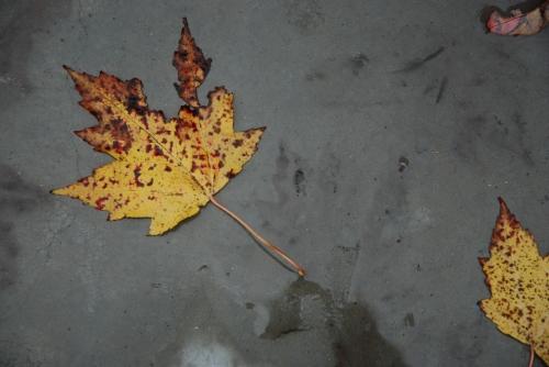 leafpattern2