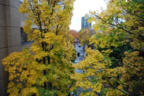 Portlandfallstreet